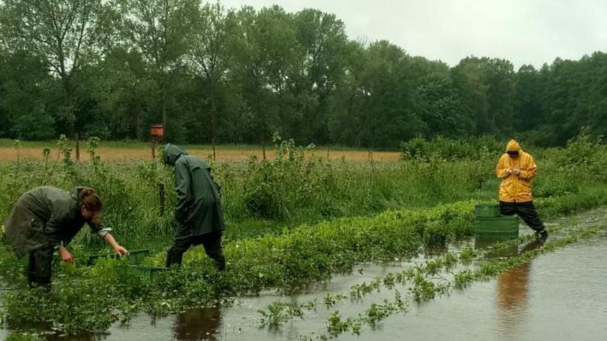 Biokräuterei nach Dauerregen