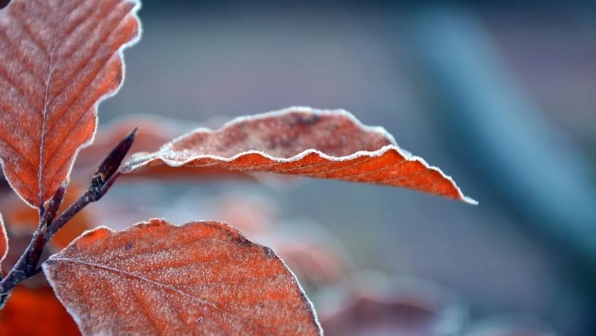 Herbstlaub mit Rauhreif