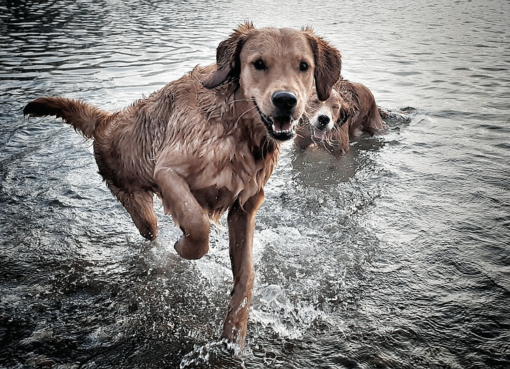 Warum nasse Hunde stinken!