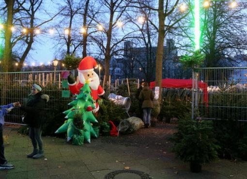 Weihnachtsbäume & Tannengrün