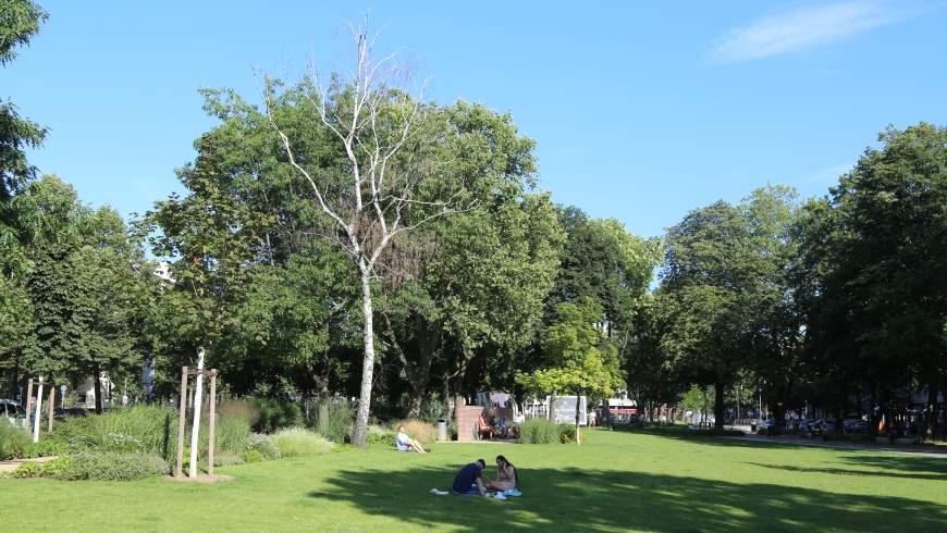 Olivaer Platz: abgestorbene Birke auf der neu angelegten Grünfläche - Foto: cwz